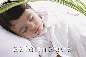Asia Images Group - baby boy sleeping under plant