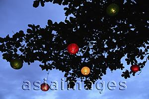 Asia Images Group - colored lanterns at night hanging from tree