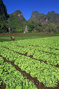 Asia Images Group - Thailand,Chiang Rai,Agricultural Fields and Karst Cliffs