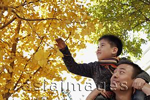Asia Images Group - Young boy on dad's shoulders looking at the trees